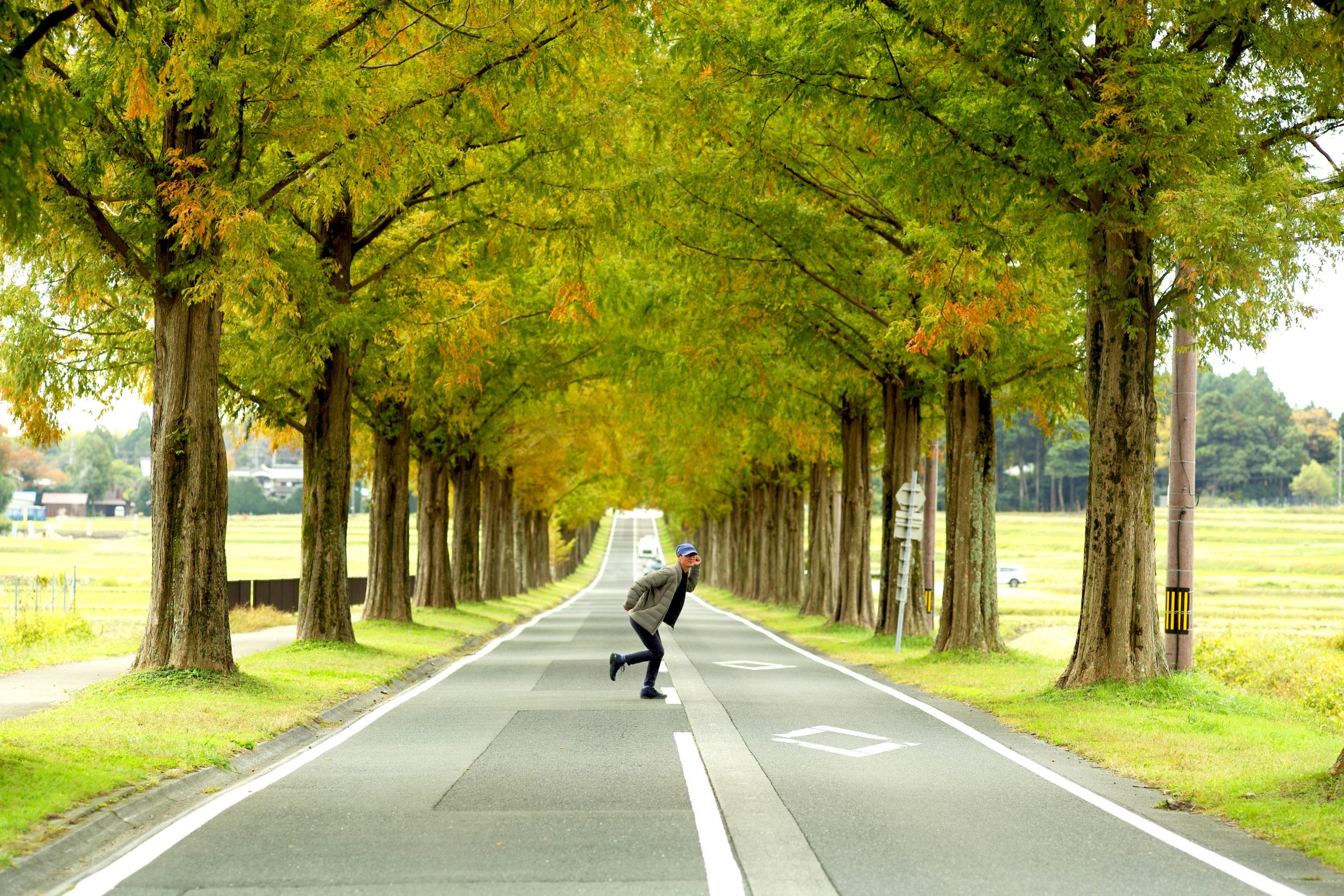 滋賀県マキノ高原 メタセコイア並木